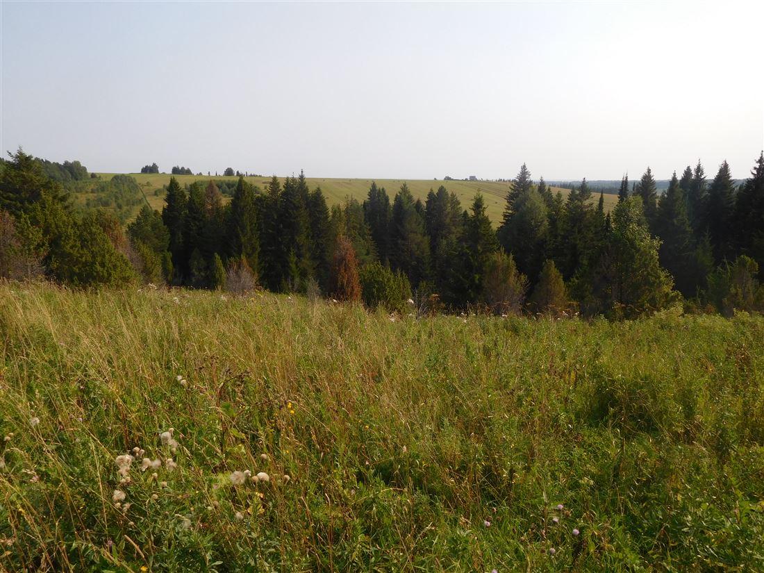 id в имлс 1198094 продается участок площадью 11 гектар, разрешение на использование кф ...